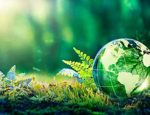 Sustainability in Packaging: A Snapshot (2021)